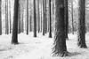 winter trees-5312