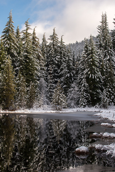 trillium lake winter-3896