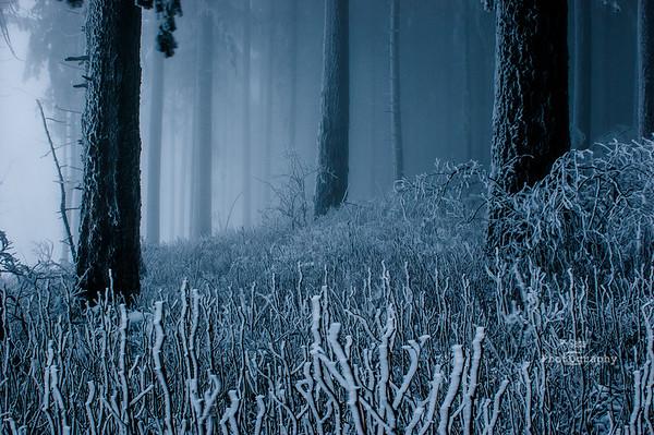 winter blue-0279