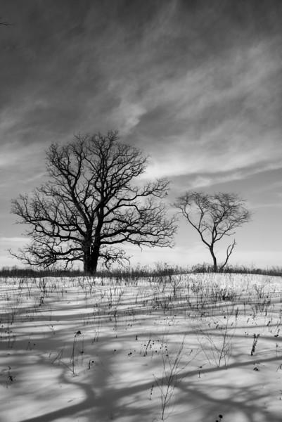 Oak-Savannah Prairie