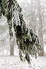 winter 2012 DSC_0298