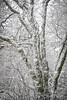frosty Day--5294