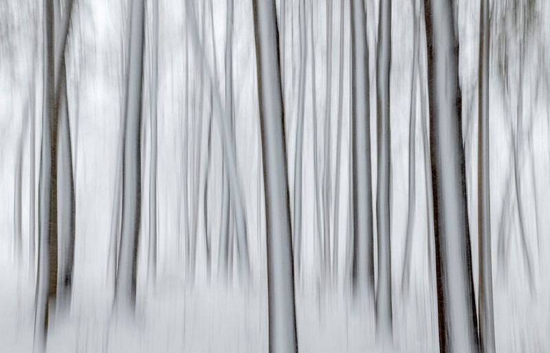 Snow pines in motion