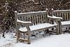 First Winter Snow, UW Arboretum, Madison, Wisconsin