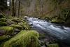 tanner creek-7765