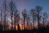 Sunrise in Sax-Zim bog