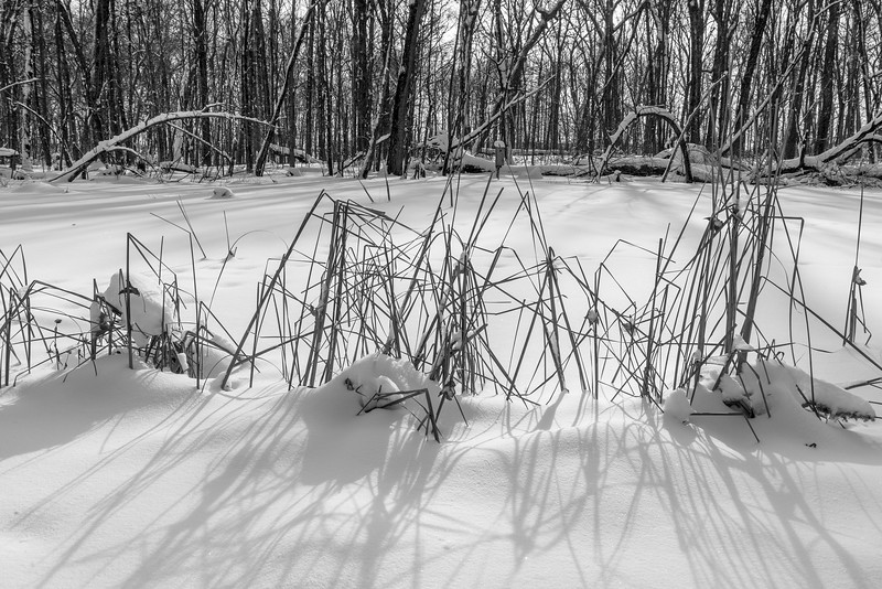 Winter in wetland