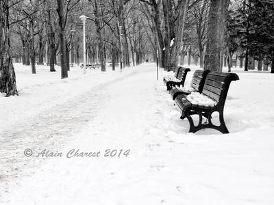 Solitaire au Parc Lafontaine