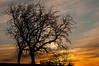 MNWN-12155: Sunset at the Minnesota Landscape Arboretum