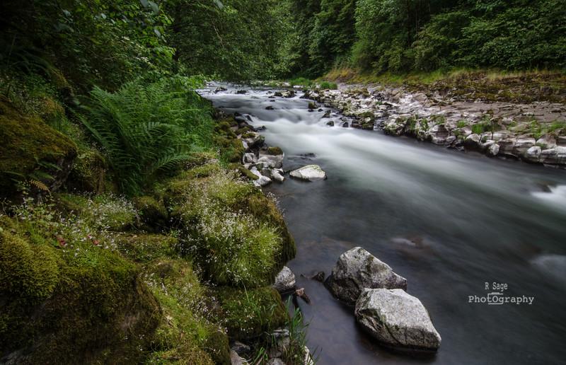 nestucca river-3379