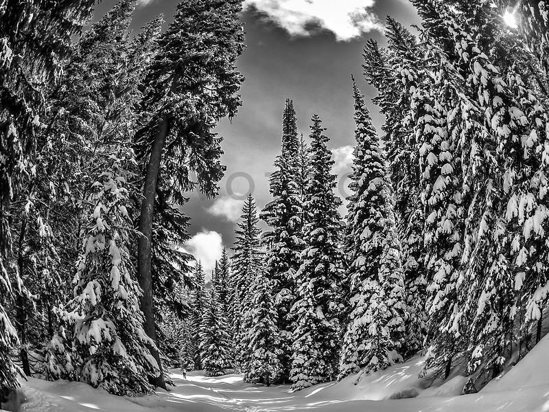 XC Skiing in Winter Wonderland, Montana - monochrome