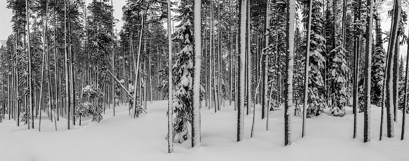 A Look Into A Wintry Forest, Chief Joseph Pass, Montana
