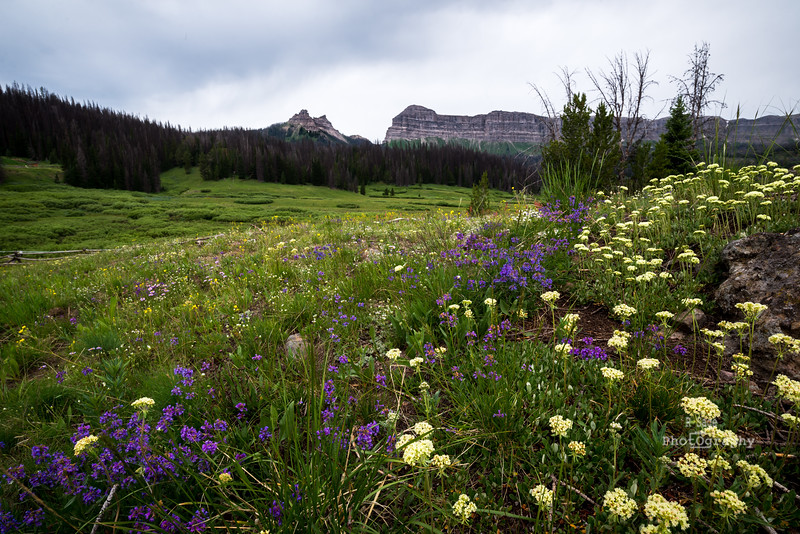 brooks lake wildflowers-3322