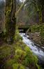wahkeena creek-5264