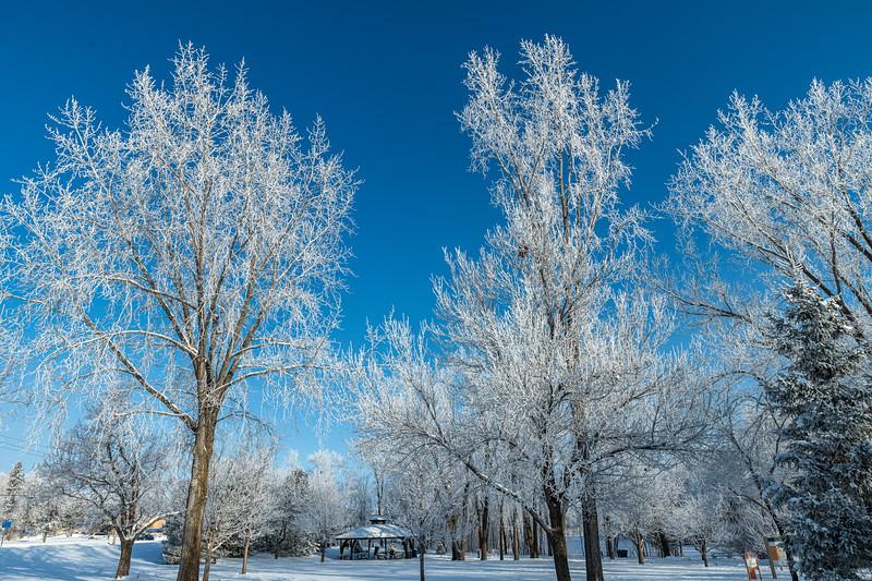 Hoar Frost at Elm Creek