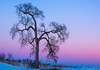 Lone tree at twilight