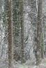 snow day-5195