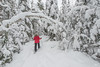Snowshoeing in Superior National Forest