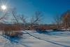 Winter sun at Duckweed Pond