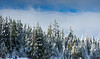winter-3892