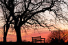 MNWN-12165: Bench at sunset