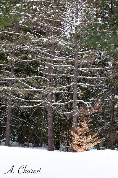 Bordure de forêt laurentienne
