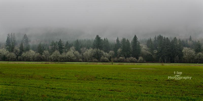 foggy greens-8139