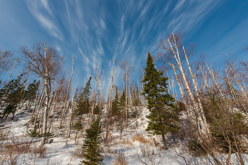 Misty clouds over birch forest