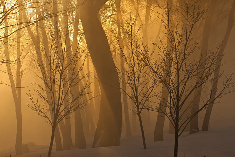 MNWN-11105: Morning fog on the banks of the Mississippi