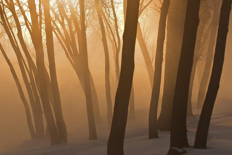 MNWN-11107: Mississippi fog