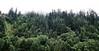 klamath trees-2759