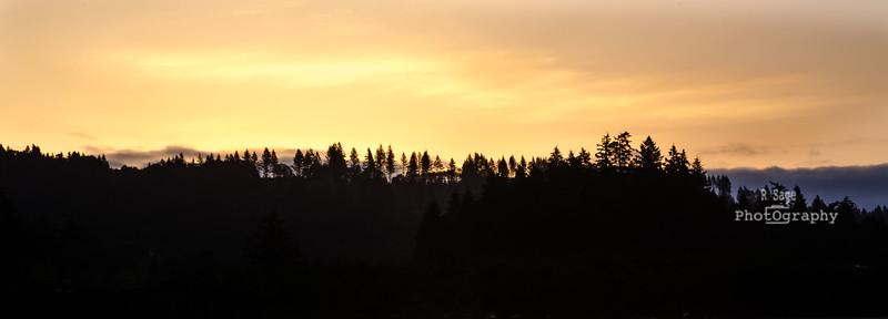 morning tree tops-3225