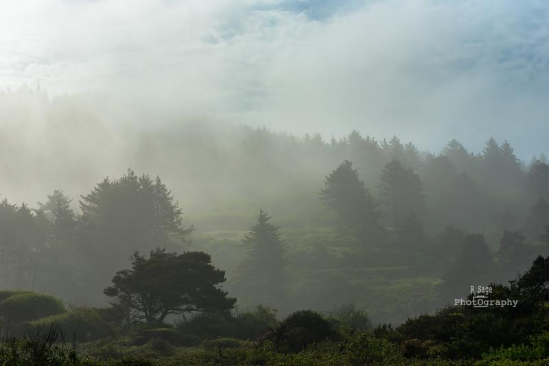 foggy day-1467