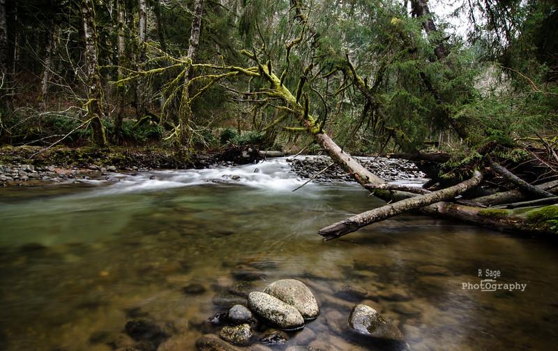 salmon river-8045