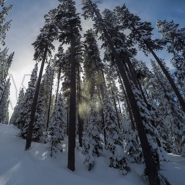 Cold Smoke on A Very Cold Morning, Chief Joseph Pass, Montana