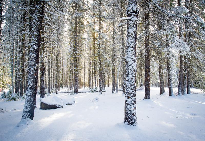 backlit trees-3843