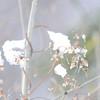 Apples_Winter_2009 (120)
