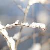 Apples_Winter_2009 (19)
