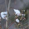 Apples_Winter_2009 (119)