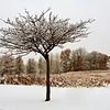 Prairie Trees in Eagan
