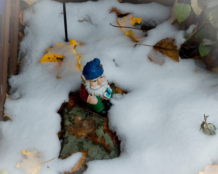 Unhappy Snow Gnome<br /> <br /> As if the cats, dogs and leaves weren't enough!  Good thing I wore my toboggan!