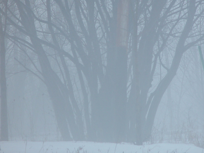 Fog PARC IL-BOSCHETTO PARK Brouillard
