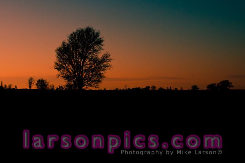 Lone Tree in farm field