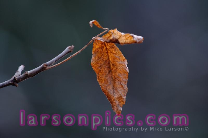 Lone Leaf in La Salle Falls - Florence, Wisconsin