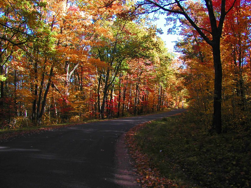 Fall scene on country road