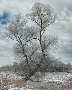 Frozen winter tree, Brookfield, WI along a river.