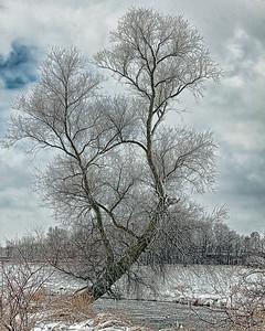 Frozen winter tree, Brookfield, WI along a river.
