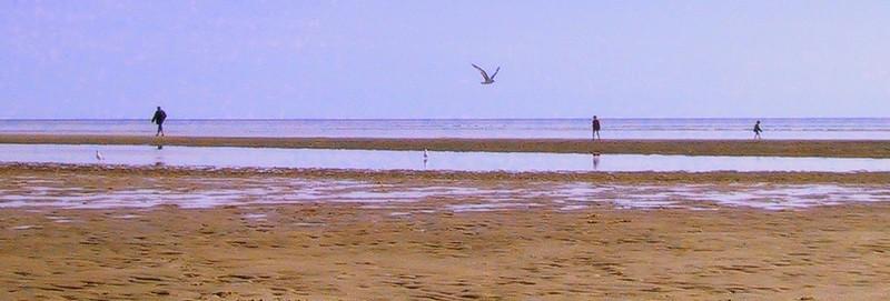 Low tide in Truro MA