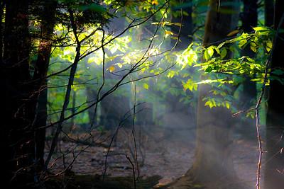Rays Of Light Through Trees