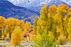 Wyoming, Jackson Hole, Teton Village, Fall Colors, 怀俄明, 大提顿国家公园, 秋色